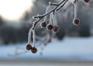 refreshing frost